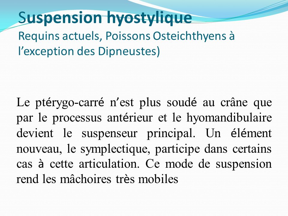Suspension hyostylique Requins actuels, Poissons Osteichthyens à l'exception des Dipneustes)