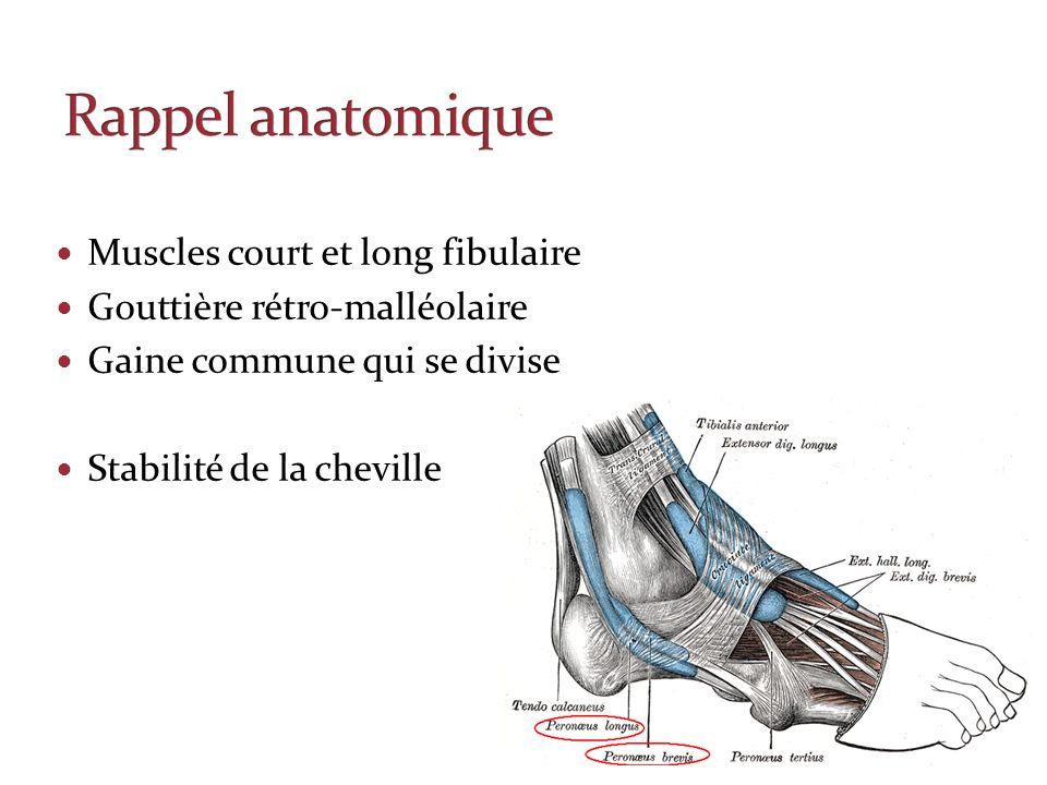Rappel anatomique Muscles court et long fibulaire