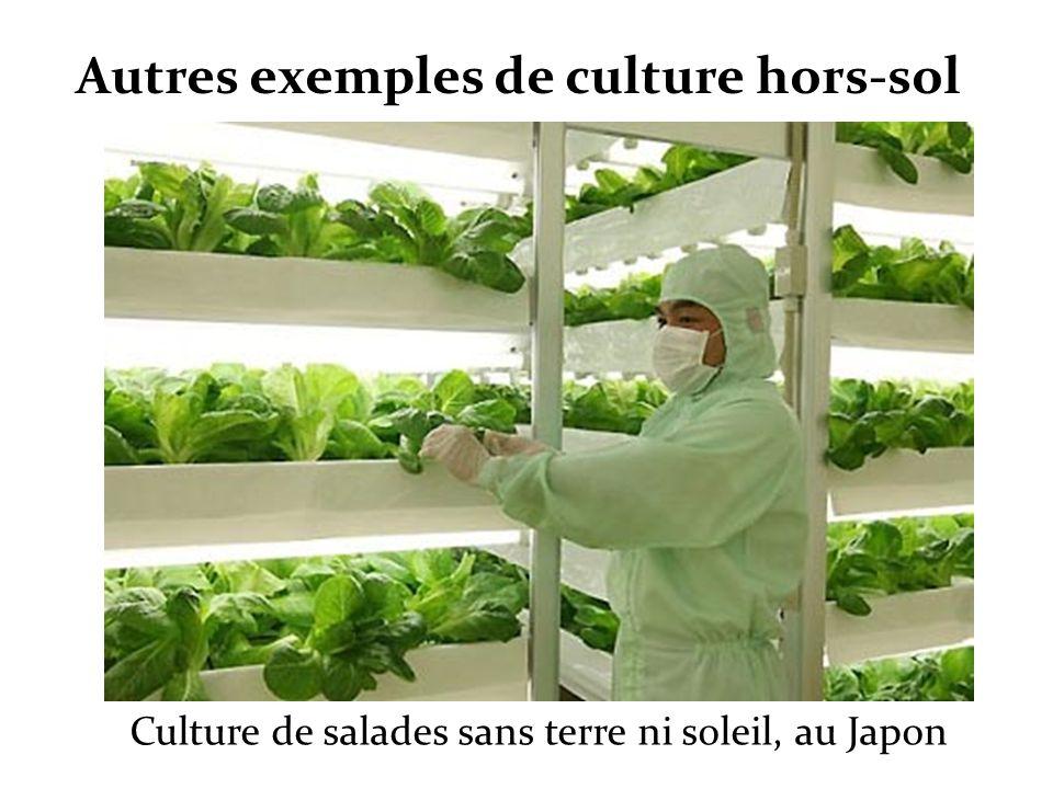 Autres exemples de culture hors-sol