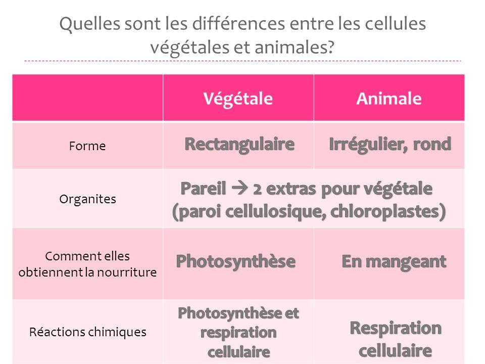 Quelles sont les différences entre les cellules végétales et animales