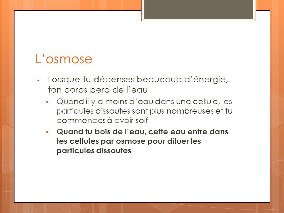 L'osmose Lorsque tu dépenses beaucoup d'énergie, ton corps perd de l'eau.