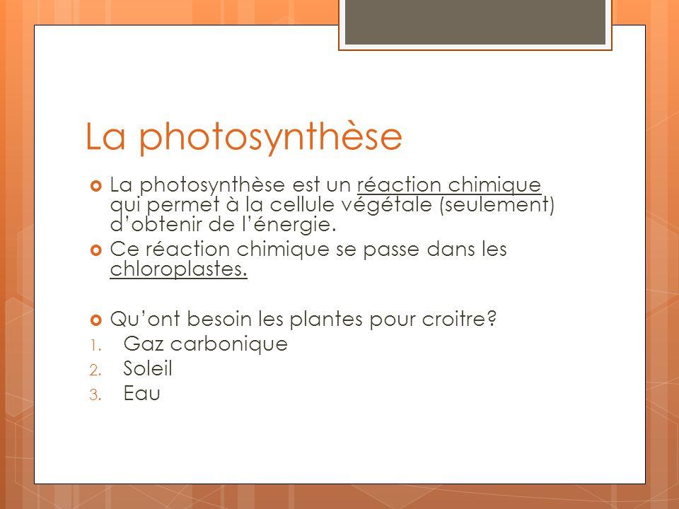 La photosynthèse La photosynthèse est un réaction chimique qui permet à la cellule végétale (seulement) d'obtenir de l'énergie.