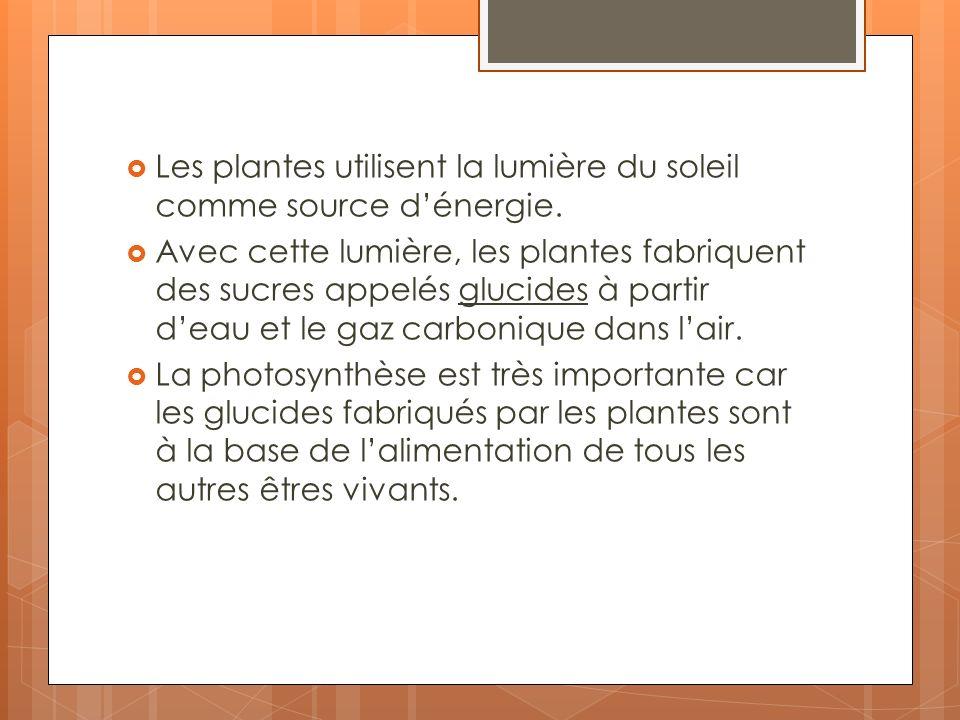 Les plantes utilisent la lumière du soleil comme source d'énergie.