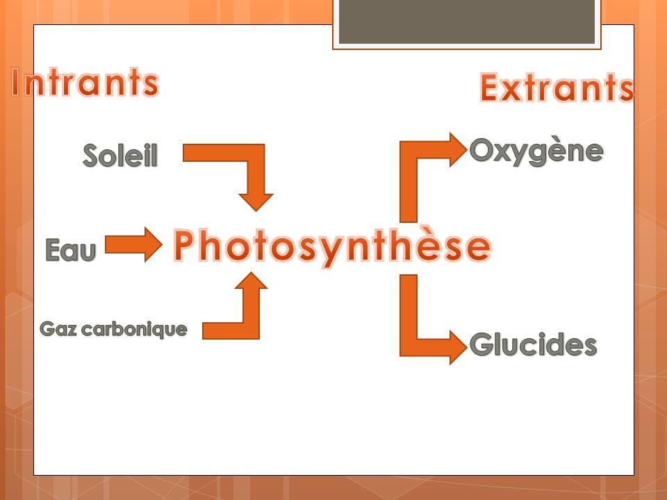Photosynthèse Intrants Extrants Oxygène Soleil Eau Glucides