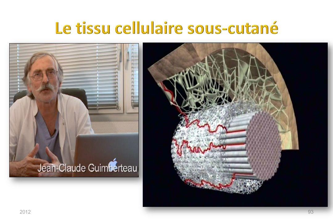 Le tissu cellulaire sous-cutané