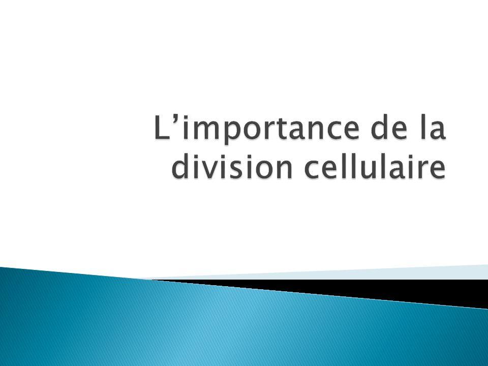 L'importance de la division cellulaire
