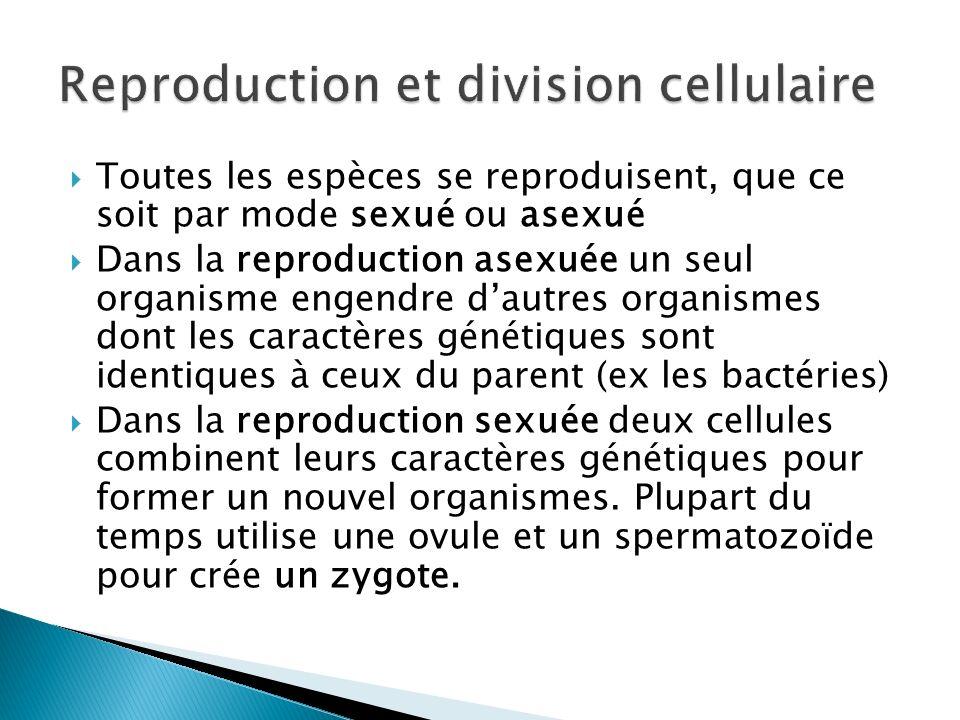 Reproduction et division cellulaire