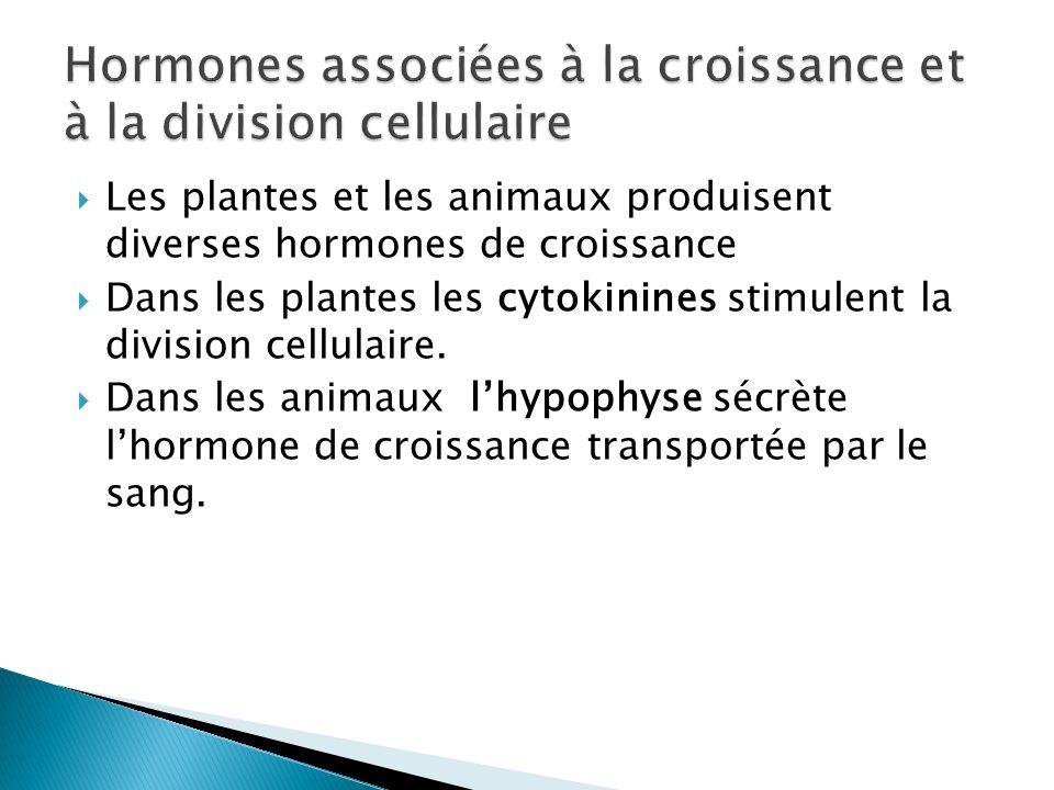 Hormones associées à la croissance et à la division cellulaire
