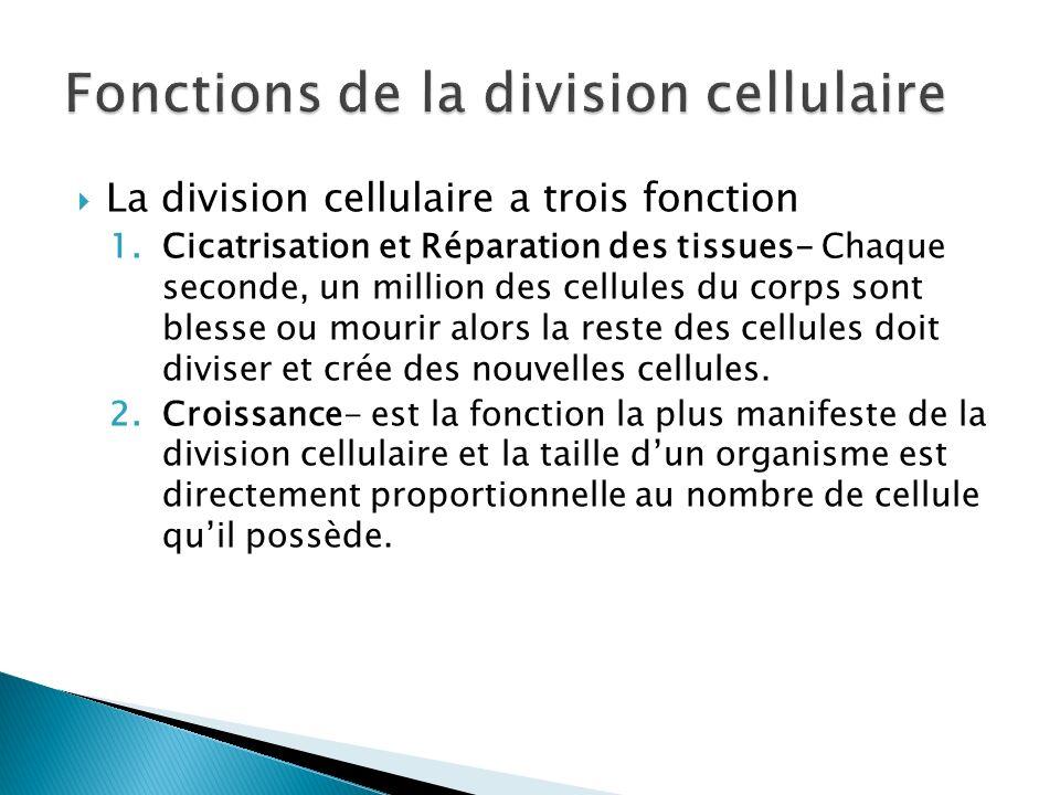Fonctions de la division cellulaire