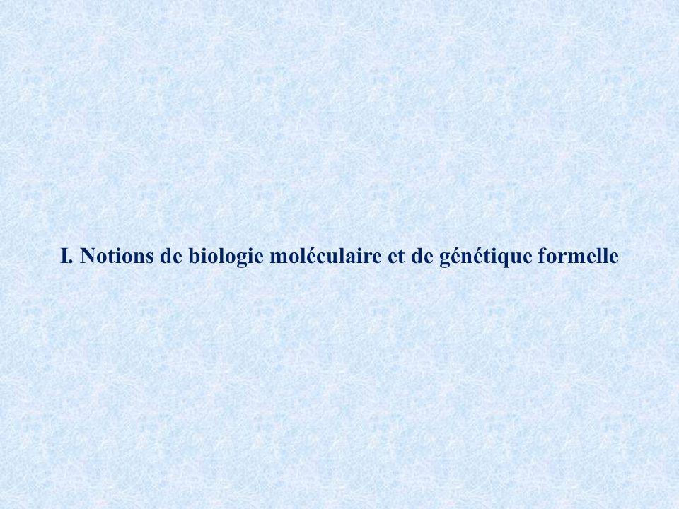 I. Notions de biologie moléculaire et de génétique formelle
