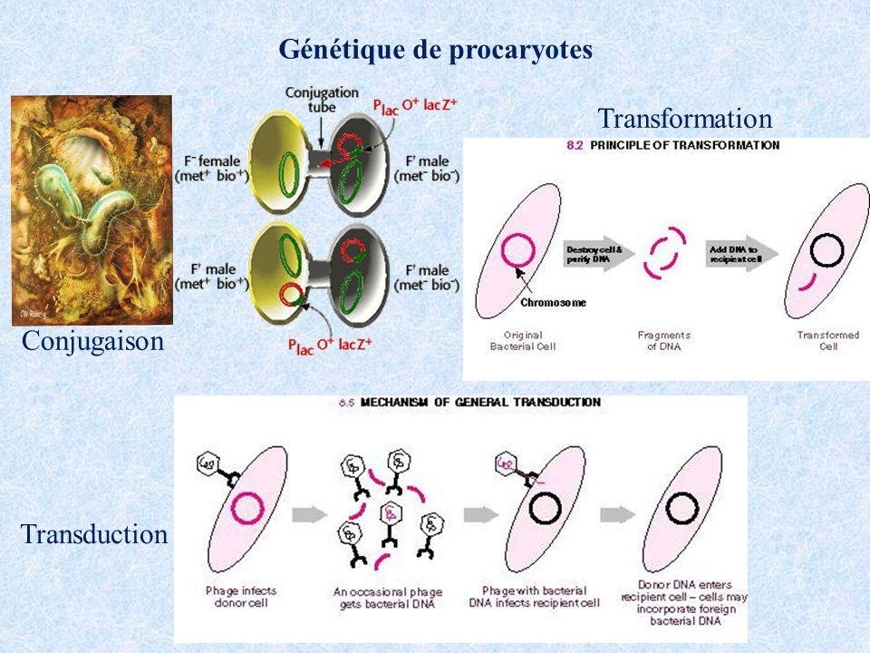 Génétique de procaryotes