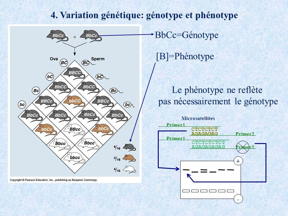 4. Variation génétique: génotype et phénotype