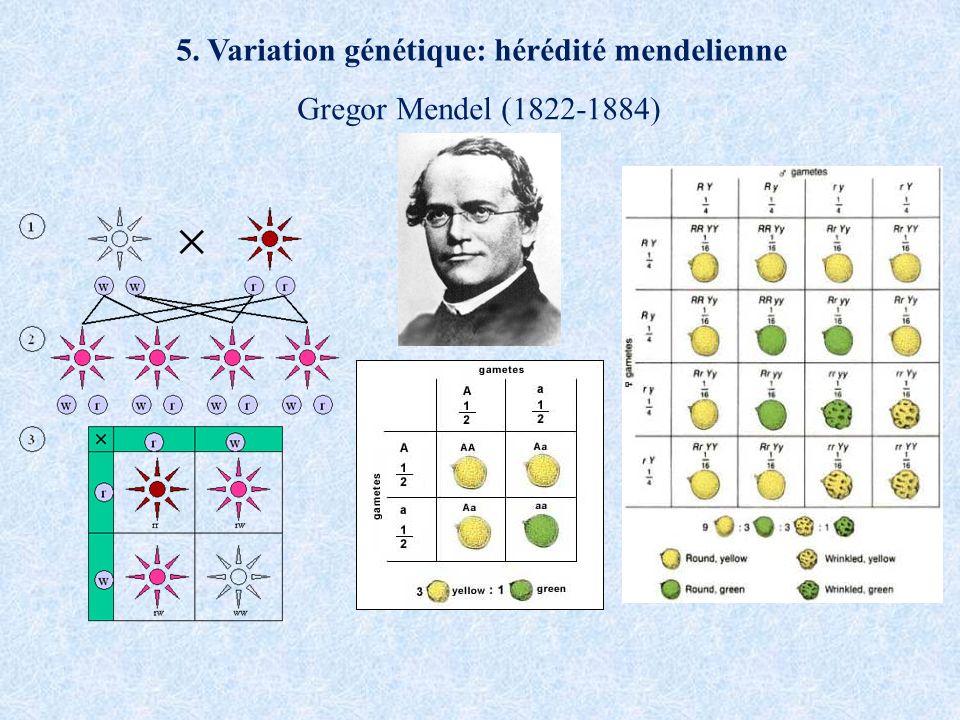 5. Variation génétique: hérédité mendelienne