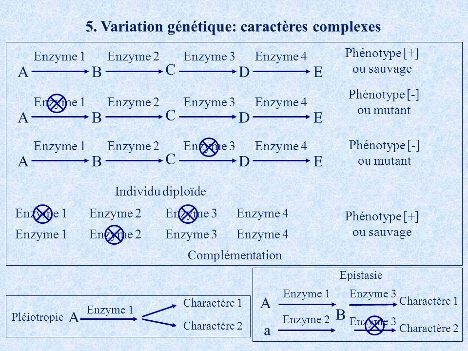 5. Variation génétique: caractères complexes