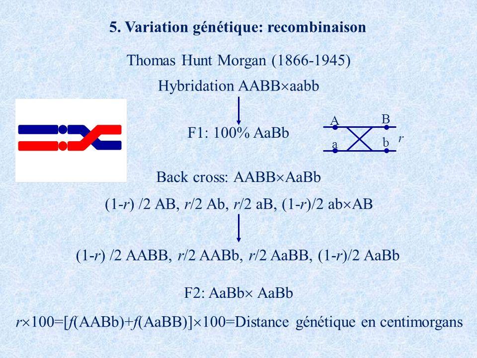 5. Variation génétique: recombinaison