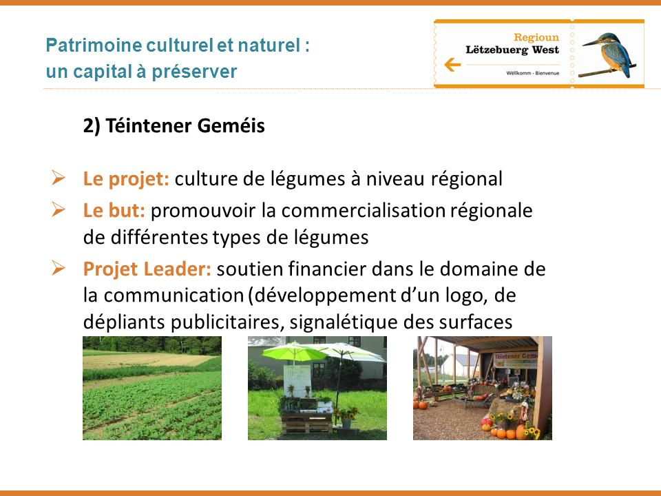 Le projet: culture de légumes à niveau régional