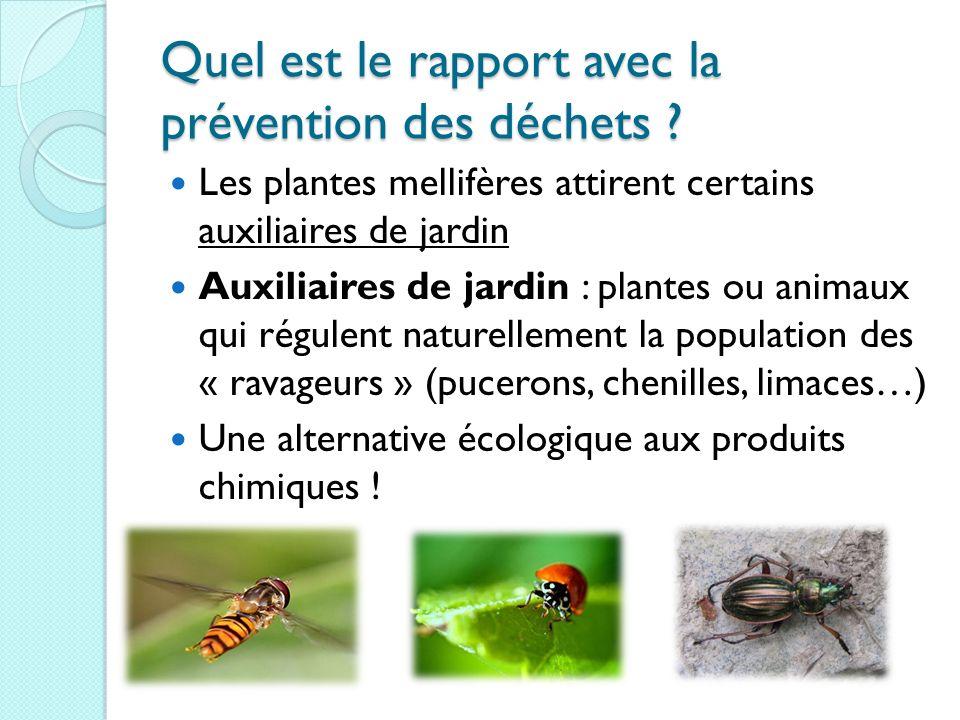 Quel est le rapport avec la prévention des déchets