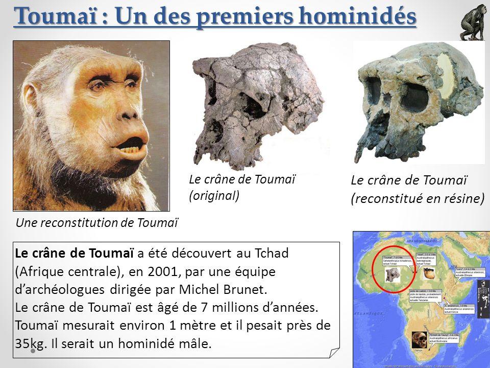 Toumaï : Un des premiers hominidés