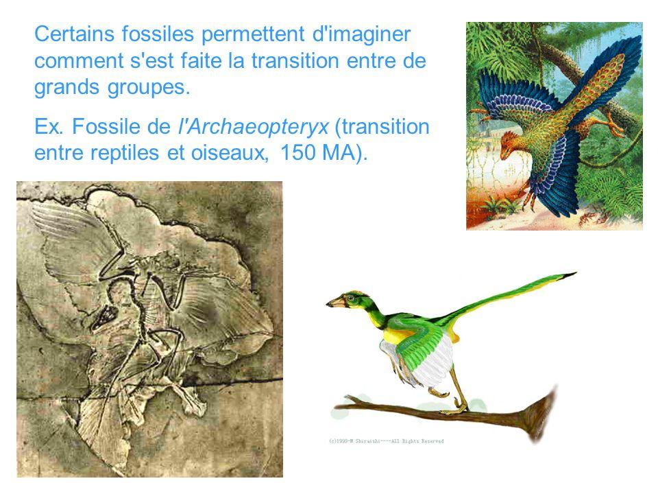 Certains fossiles permettent d imaginer comment s est faite la transition entre de grands groupes.