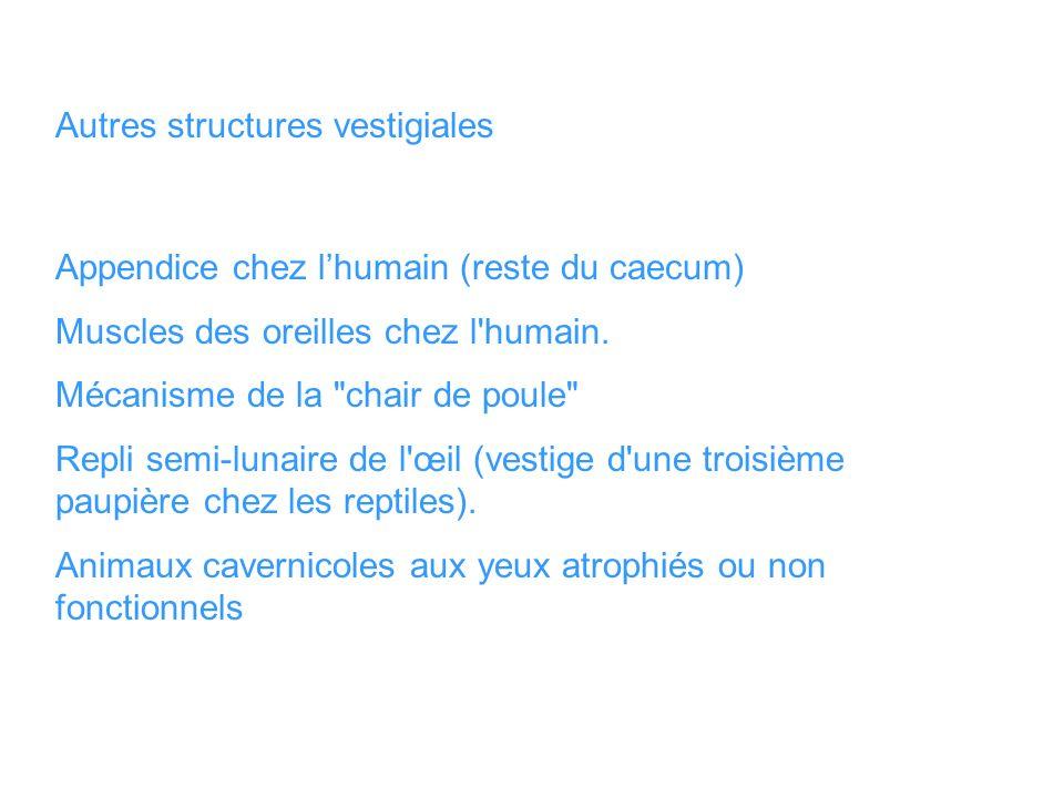 Autres structures vestigiales