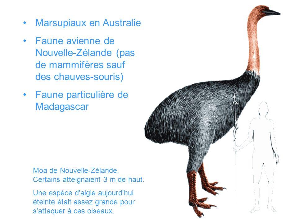 Marsupiaux en Australie