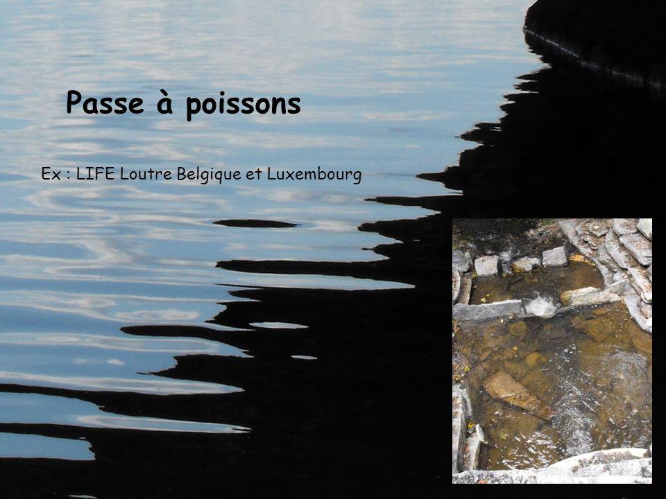 Passe à poissons Ex : LIFE Loutre Belgique et Luxembourg