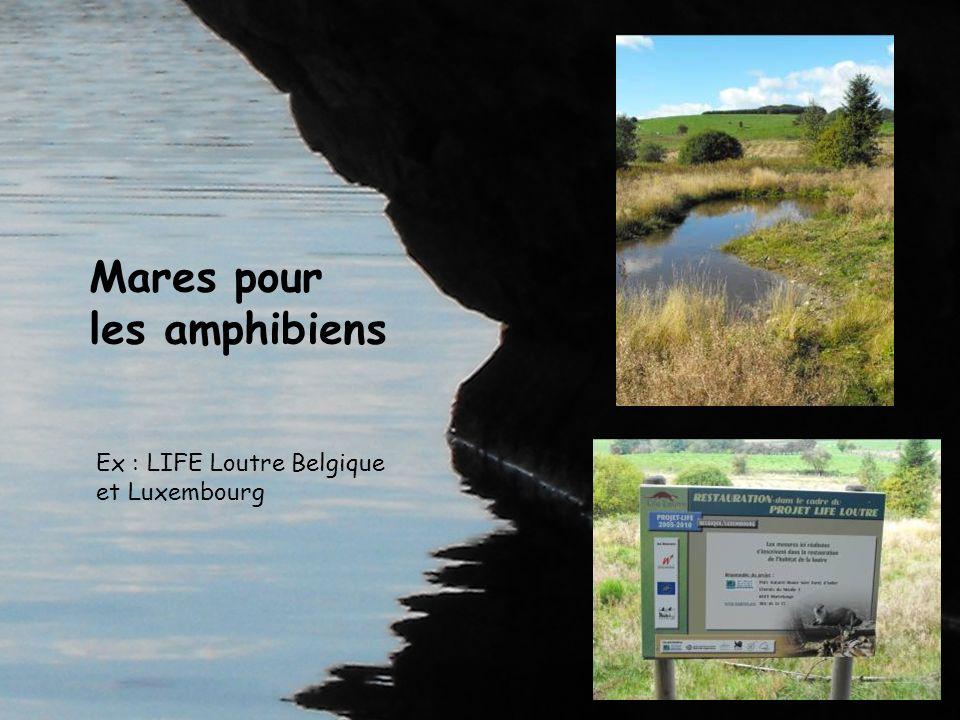 Mares pour les amphibiens