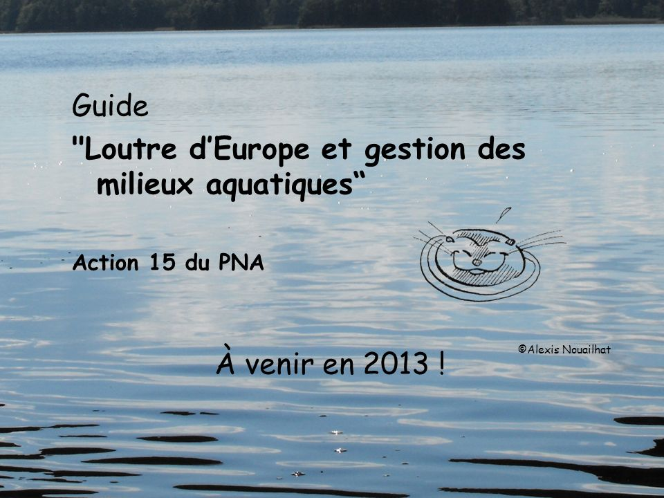 Loutre d'Europe et gestion des milieux aquatiques