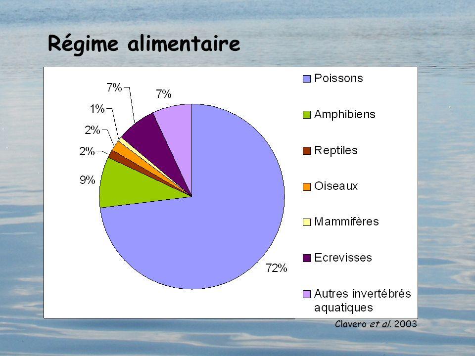 Régime alimentaire ©Rachel Kuhn Clavero et al. 2003