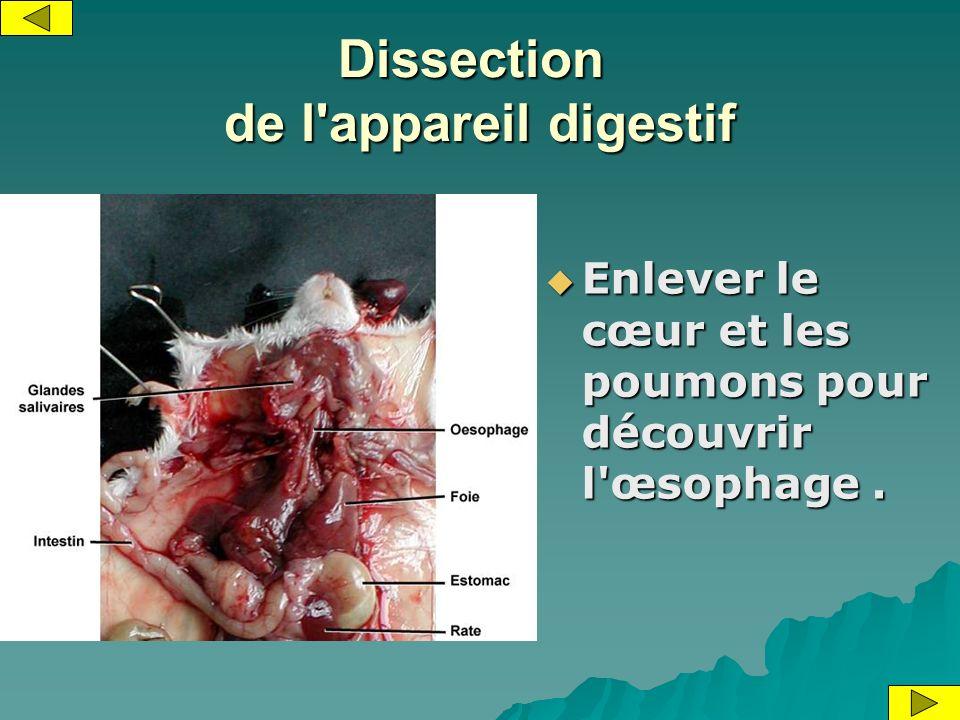 Dissection de l appareil digestif