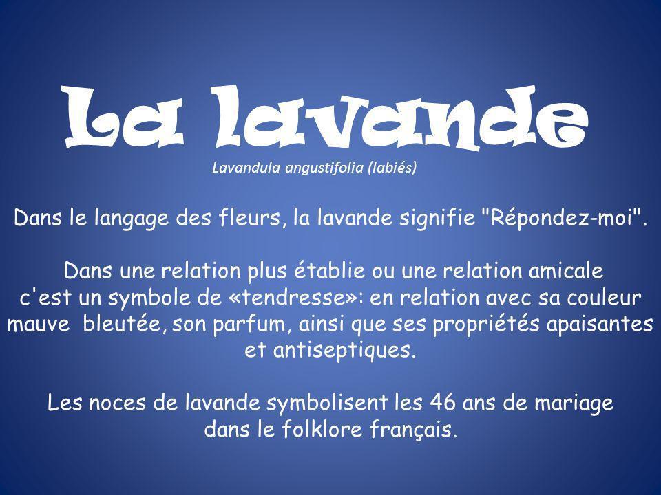 La lavande Lavandula angustifolia (labiés) Dans le langage des fleurs, la lavande signifie Répondez-moi .
