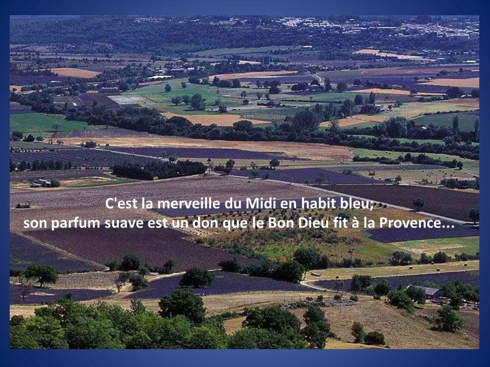 son parfum suave est un don que le Bon Dieu fit à la Provence...