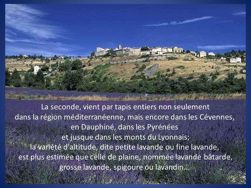 et jusque dans les monts du Lyonnais;