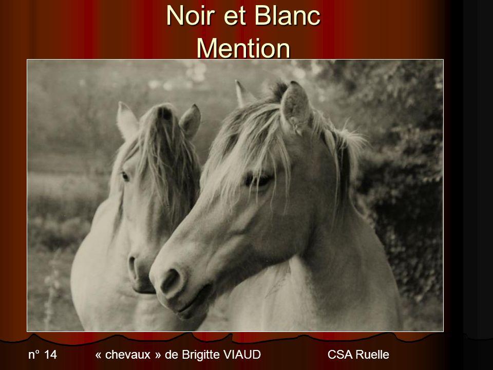 Noir et Blanc Mention n° 14 « chevaux » de Brigitte VIAUD CSA Ruelle