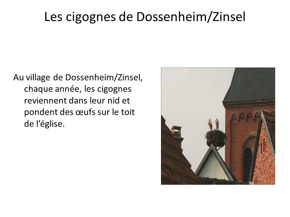 Les cigognes de Dossenheim/Zinsel