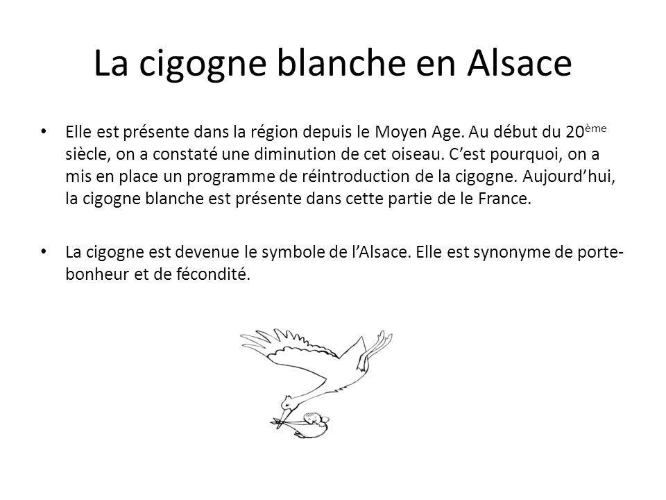 La cigogne blanche en Alsace