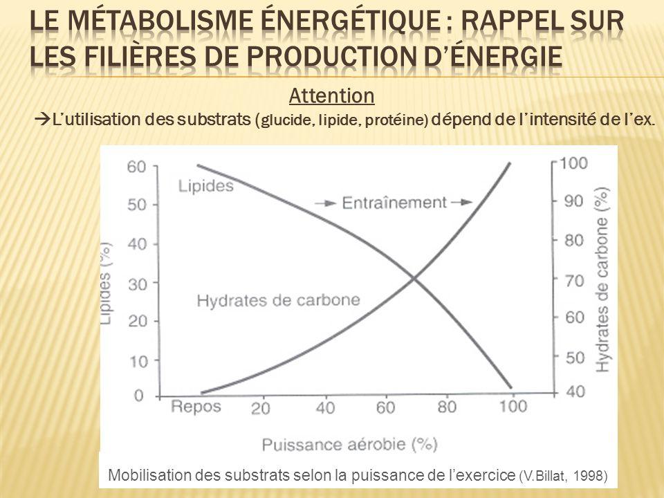 Le métabolisme énergétique : rappel sur les filières de production d'énergie