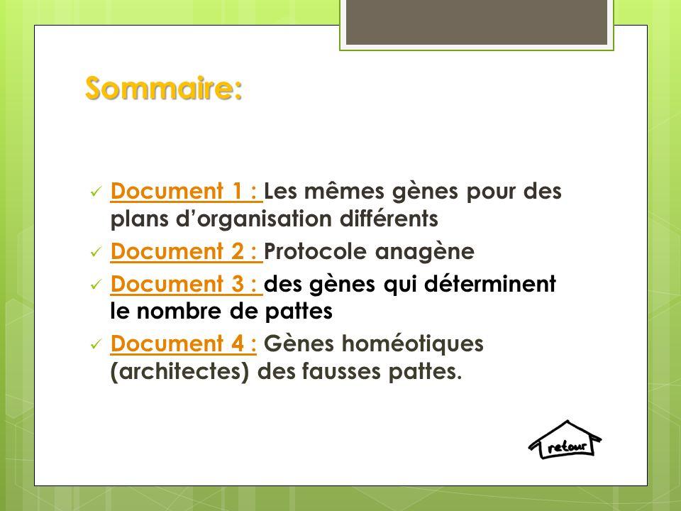 Sommaire: Document 1 : Les mêmes gènes pour des plans d'organisation différents. Document 2 : Protocole anagène.