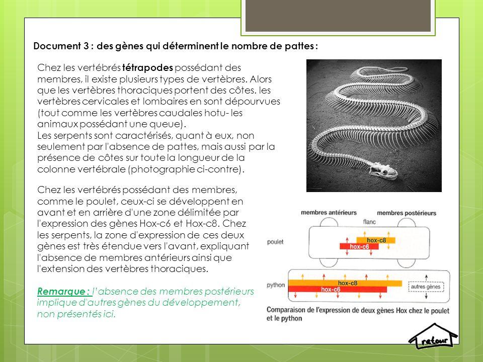 Document 3 : des gènes qui déterminent le nombre de pattes :
