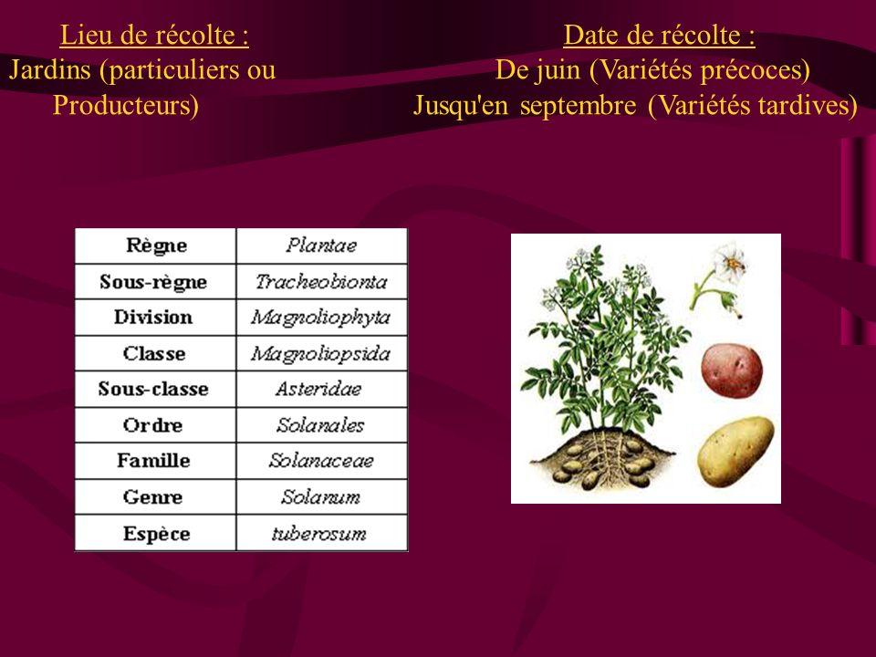 Lieu de récolte : Date de récolte : Jardins (particuliers ou De juin (Variétés précoces)