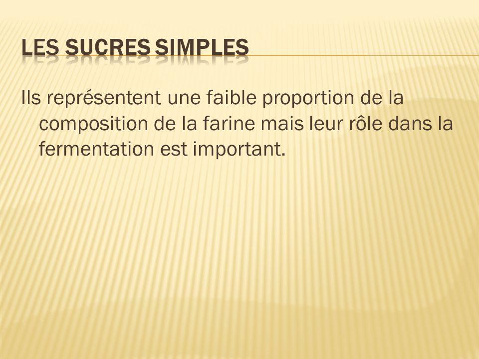 Les sucres simples Ils représentent une faible proportion de la composition de la farine mais leur rôle dans la fermentation est important.