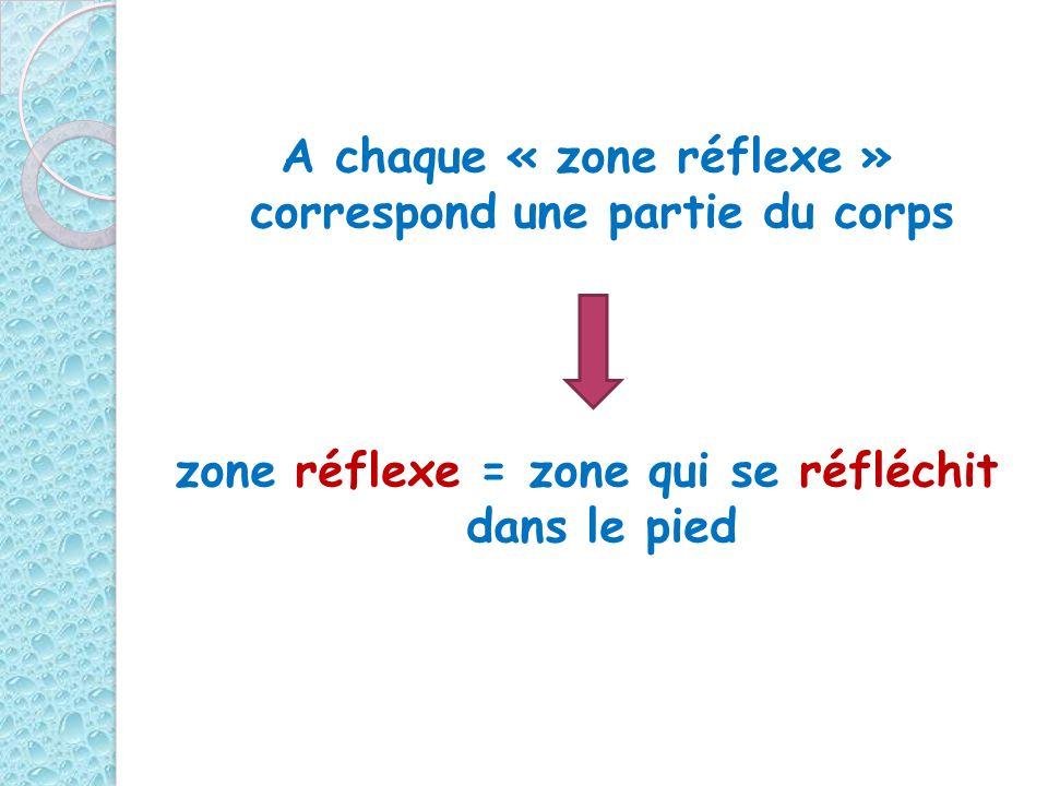A chaque « zone réflexe » correspond une partie du corps