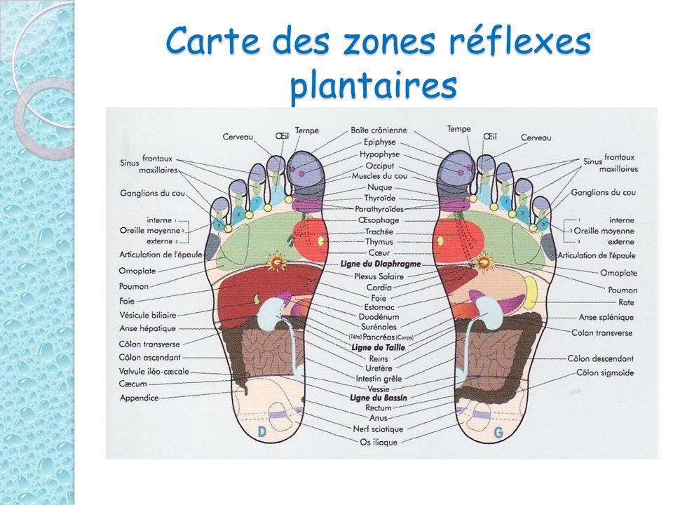 Carte des zones réflexes plantaires