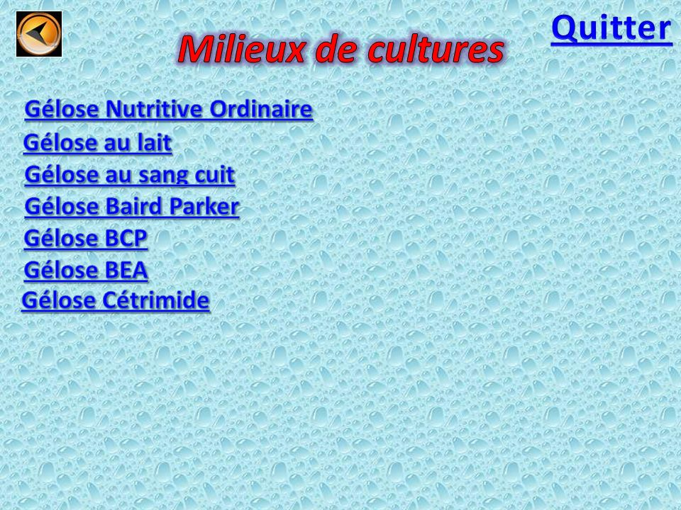 Gélose Nutritive Ordinaire