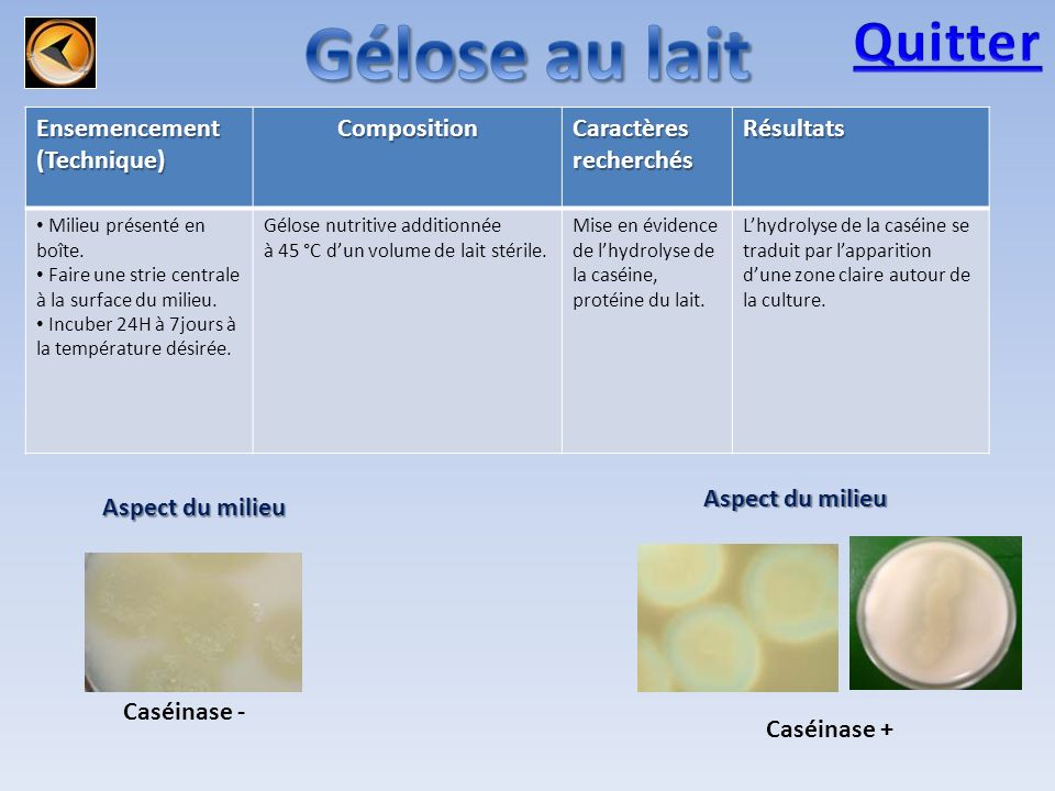 Gélose au lait Quitter Ensemencement (Technique) Composition