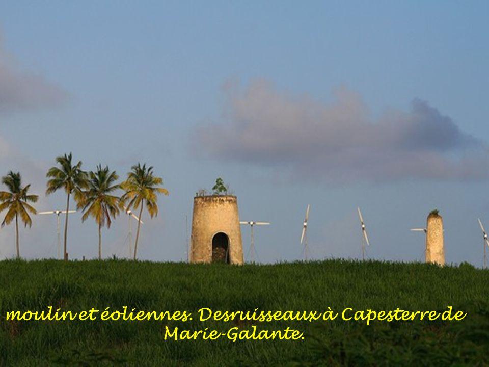 moulin et éoliennes. Desruisseaux à Capesterre de Marie-Galante.