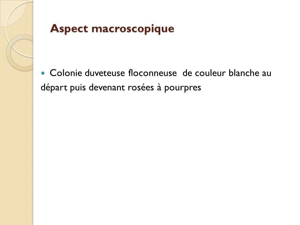 Aspect macroscopique Colonie duveteuse floconneuse de couleur blanche au.