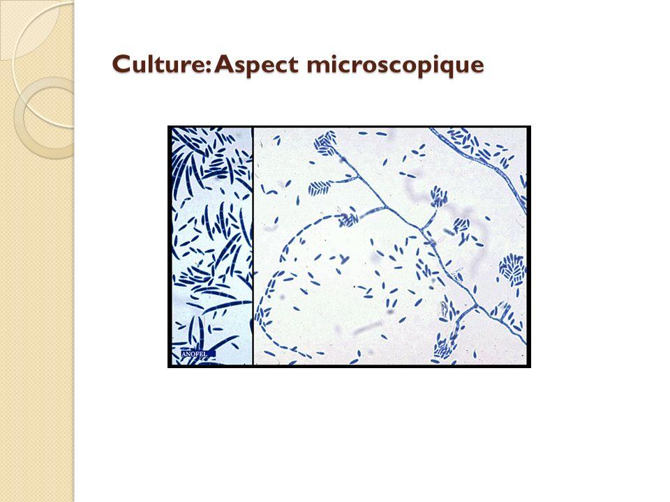 Culture: Aspect microscopique