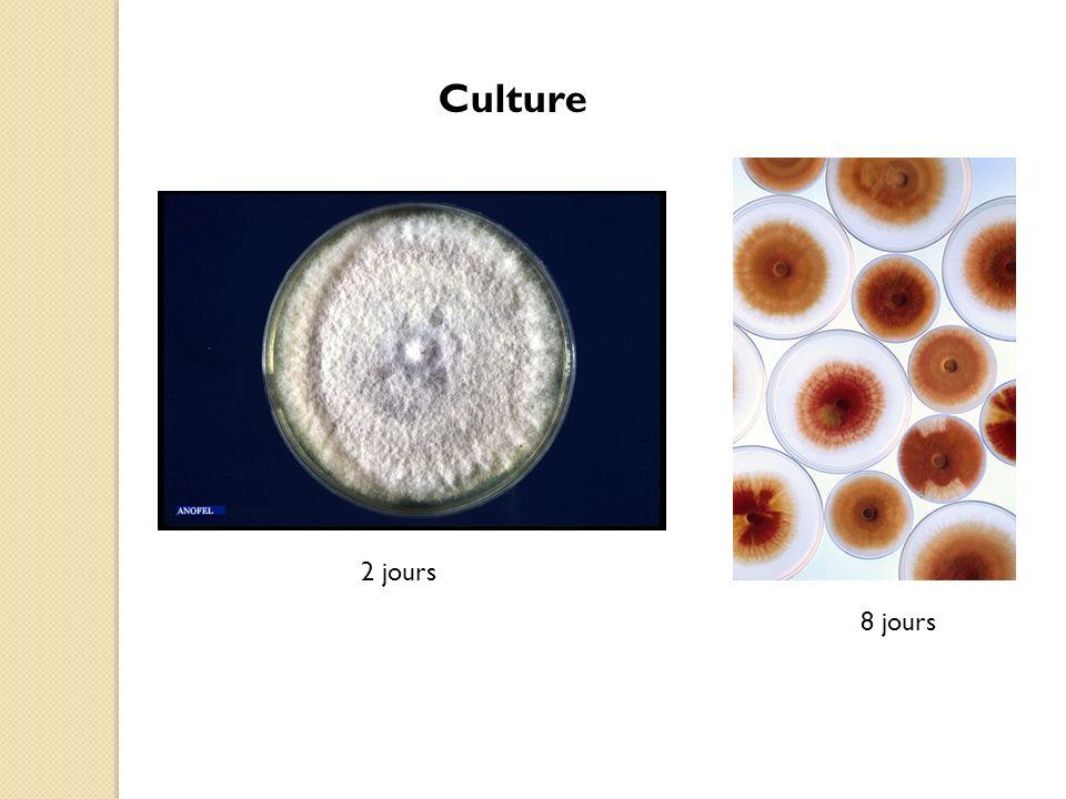Culture 2 jours 8 jours