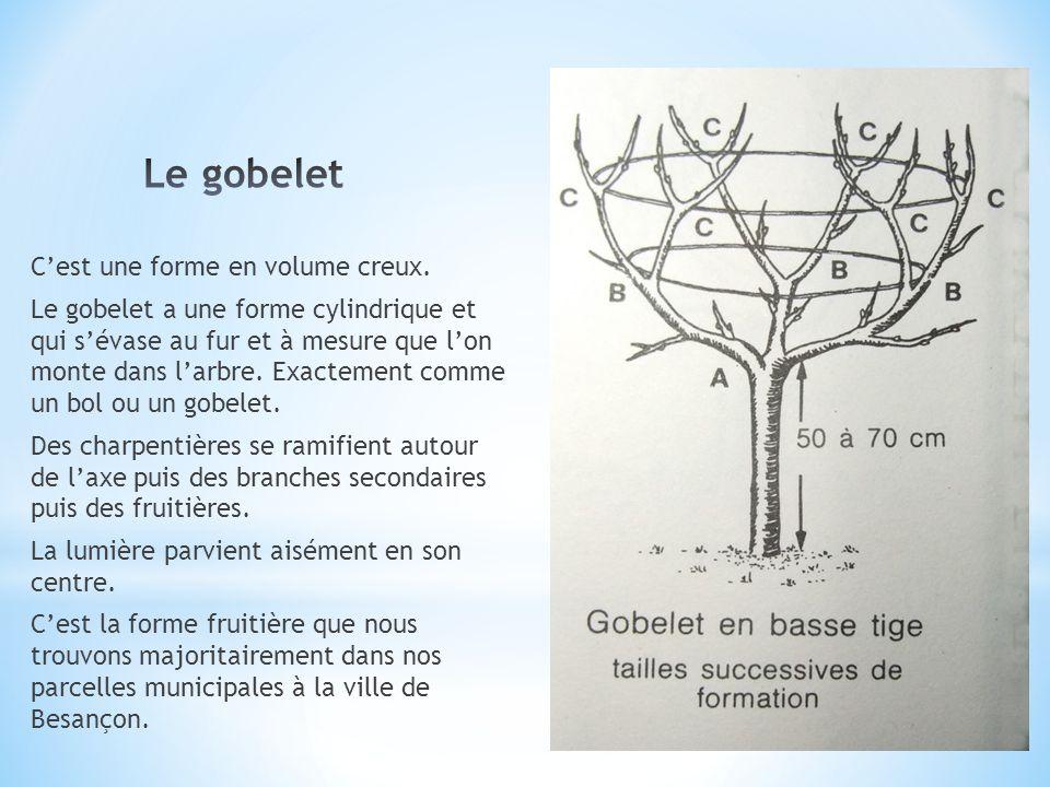 Le gobelet C'est une forme en volume creux.